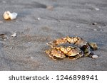crabs familly frends | Shutterstock . vector #1246898941