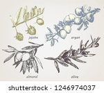 hand drawn set of plants  olive ... | Shutterstock .eps vector #1246974037