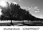 black and white tree road photo | Shutterstock . vector #1246990657