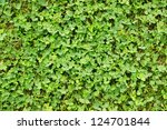 Texture   Fresh Green Leaves O...