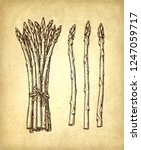 ink sketch of asparagus. hand... | Shutterstock .eps vector #1247059717