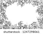 hand drawn branches of fruit... | Shutterstock . vector #1247298061