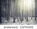 Bright Sunny Pine Forest In Th...