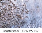branch covered with snow white... | Shutterstock . vector #1247497717