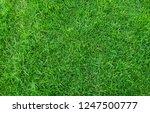 green grass texture for...   Shutterstock . vector #1247500777