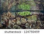 reef building corals grow in... | Shutterstock . vector #124750459