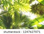 blurred summer background....   Shutterstock . vector #1247627071