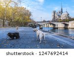 cathedral of notre dame de... | Shutterstock . vector #1247692414