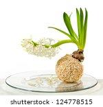 Blooming white hyacinth flower - stock photo
