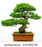 Bonsai Pine Tree Against A...