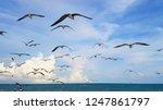 flock of seagulls and birds...   Shutterstock . vector #1247861797