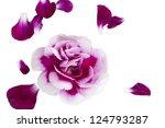 closeup image of pink flower... | Shutterstock . vector #124793287