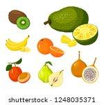 tropical exotic fruits set...   Shutterstock . vector #1248035371