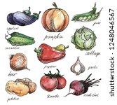hand drawn vegetables isolated... | Shutterstock .eps vector #1248046567