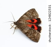 Moth   Red Underwing  Catocala...