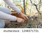 Mushrooming  Woman Picking...