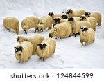 a flock of purebred domestic...   Shutterstock . vector #124844599