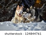 siberian husky running in the...   Shutterstock . vector #124844761