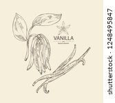 Background With Vanilla  Plant...