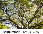 view from the bottom  the... | Shutterstock . vector #1248512647