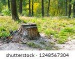 stump from felled tree in... | Shutterstock . vector #1248567304