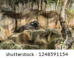 animal wildlife in zoo ... | Shutterstock . vector #1248591154