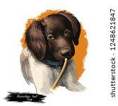 munsterlander small dog  puppy... | Shutterstock . vector #1248621847