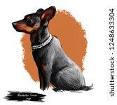 manchester terrier dog wearing... | Shutterstock . vector #1248633304