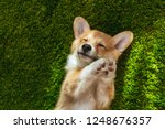 adorable welsh corgi pembroke... | Shutterstock . vector #1248676357