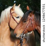 two beautiful cuddling horses... | Shutterstock . vector #1248677551