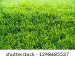 urban photography  a lawn is an ... | Shutterstock . vector #1248685537