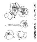 water lily nenuphar flower.... | Shutterstock .eps vector #1248691021
