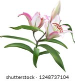 illustration with light lily... | Shutterstock .eps vector #1248737104