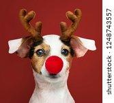 adorable jack russell retriever ... | Shutterstock . vector #1248743557