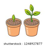 flowerpot with sprout and green ... | Shutterstock .eps vector #1248927877