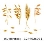 realistic set of cereal plants ... | Shutterstock . vector #1249026031