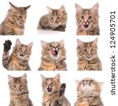 Stock photo cat emotions composite isolated on white background 124905701