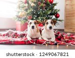 two dogs near christmas tree | Shutterstock . vector #1249067821