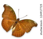 Brown Butterfly Flying Isolate...