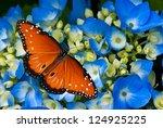 Queen Butterfly  Danaus...