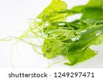 fresh chayote leaf on white... | Shutterstock . vector #1249297471