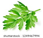 parsley isolated on white... | Shutterstock . vector #1249467994