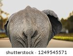 Back Side Of Elephant In...