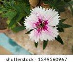 hd flower background texture... | Shutterstock . vector #1249560967