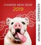 adorable bulldog puppy with a...   Shutterstock . vector #1249564654