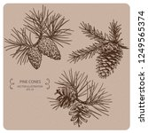 pine tree and fir tree cones ... | Shutterstock .eps vector #1249565374