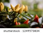 color detail of some yellow... | Shutterstock . vector #1249573834