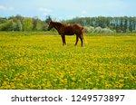 a beautiful brown stallion... | Shutterstock . vector #1249573897