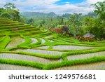 jatiluwih rice terraces  bali ...   Shutterstock . vector #1249576681