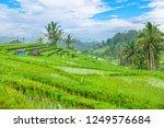 jatiluwih rice terraces  bali ...   Shutterstock . vector #1249576684